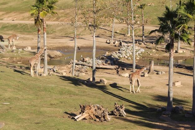 Animais selvagens em um zoológico