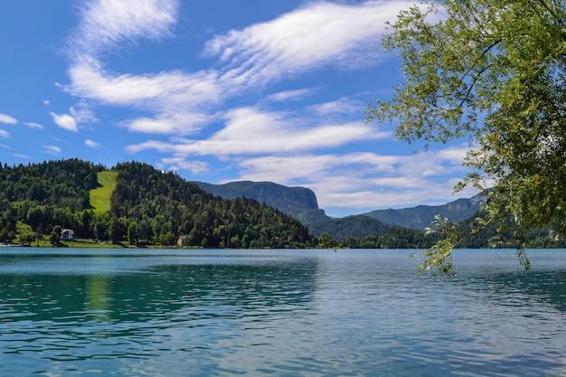 Animais selvagens. lago de montanha em um dia ensolarado