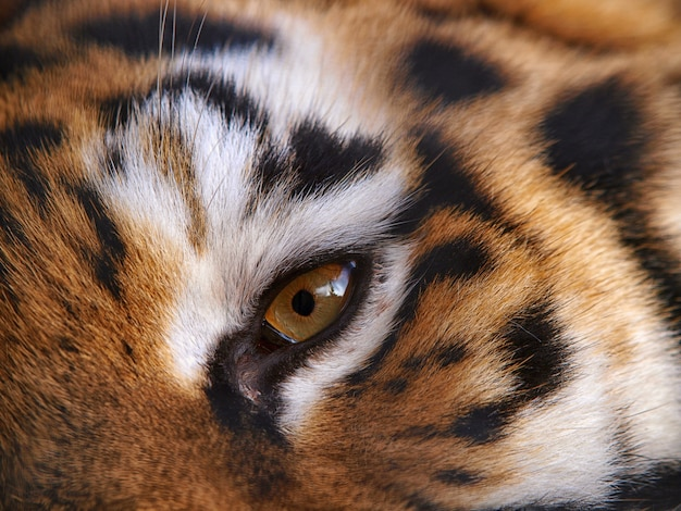 Animal bonito da selva