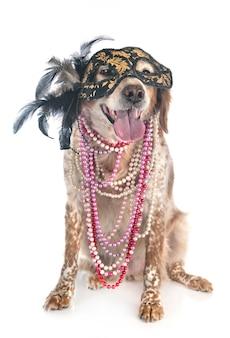 Animal cão bretanha