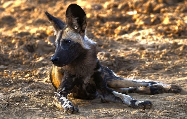 Animal de cão vadio bonito na vida selvagem