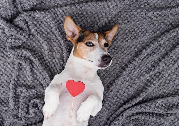 Animal de estimação de cão jovem bonito com coração vermelho