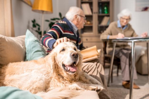 Animal de estimação feliz da família