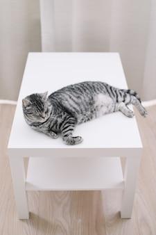 Animal de estimação gatinho fofo gato em casa