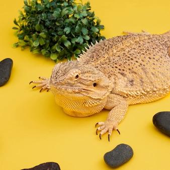 Animal de estimação iguana de alto ângulo com pedras e vegetação