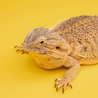 Animal de estimação iguana de alto ângulo