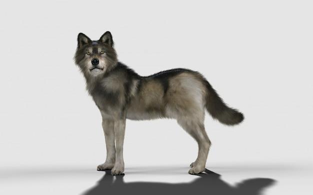 Animal do lobo do perigo