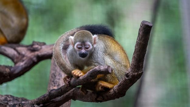 Animal dos animais selvagens do macaco