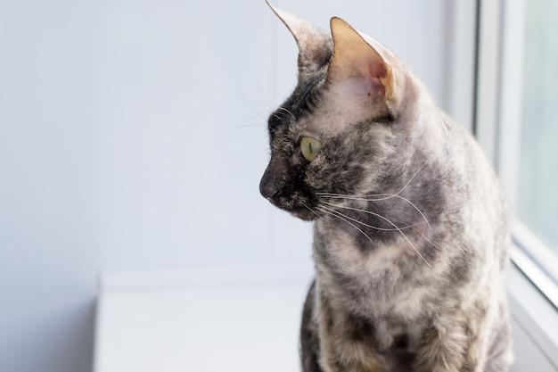 Animal gato cinzento. foco suave. copie o espaço.