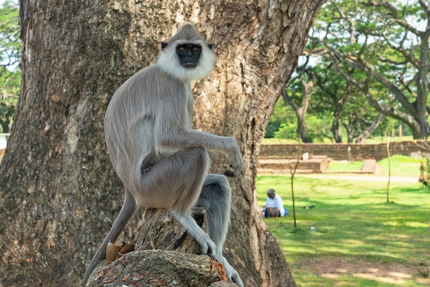 Animal macaco sentado na árvore