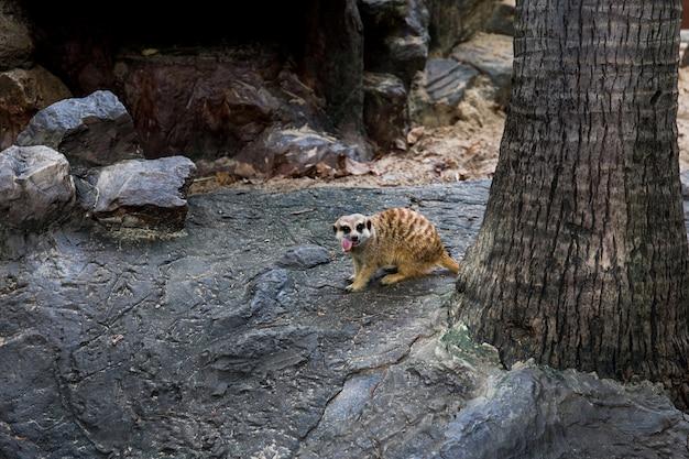 Animal no zoológico da áfrica do sul