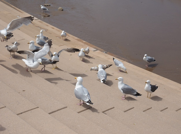 Animal pássaro gaivota