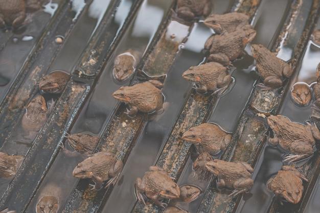Animal sapo em fazenda orgânica