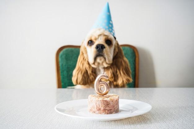 Aniversário de cachorro cocker spaniel americano