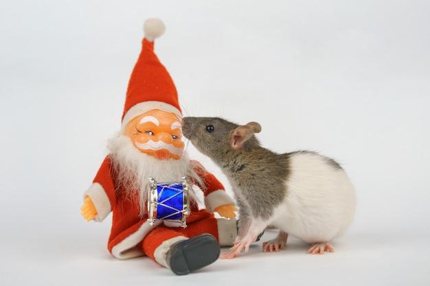 Ano novo do rato