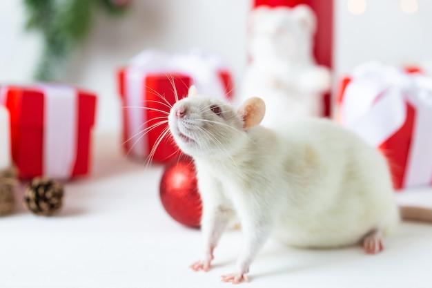 Ano novo . rato doméstico bonitinho na decoração de ano novo. o símbolo do ano 2020 é um rato.