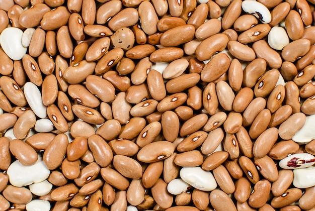 Antecedentes das sementes de feijão vermelho