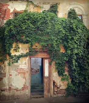 Antiga casa amarela com gesso descascado e parede coberta de hera com uma porta