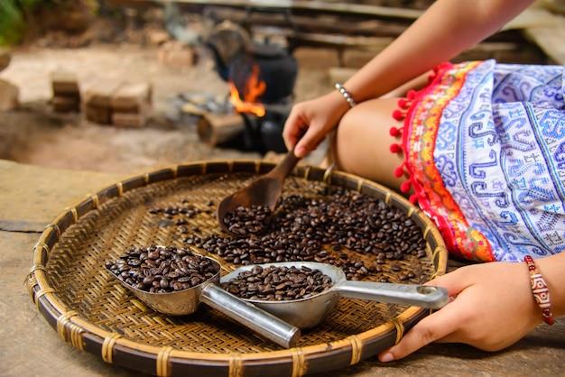 Antiga inspeção de classificação de café fresco na mae klang luang homestay chiangmai tailândia