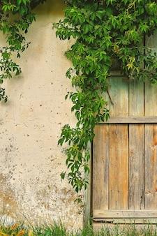 Antiga parede de pedra de uma casa ou celeiro, porta de madeira rústica, uma parede emoldurada por ramos de uvas bravas, uma vida de aldeia. decoração de interiores ou plano de fundo, moldura vertical com espaço de cópia