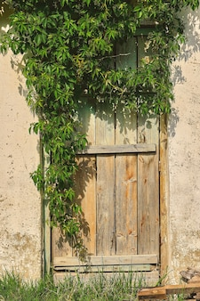 Antiga porta de madeira na parede de pedra de uma casa ou celeiro, a abertura é emoldurada por ramos de uvas bravas, o campo. decoração de interiores ou plano de fundo, moldura vertical com espaço de cópia