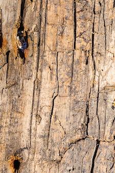 Antiga superfície rachada de uma placa de madeira