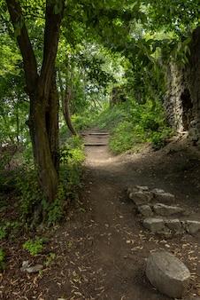 Antigas, passo, pedras, em, a, floresta