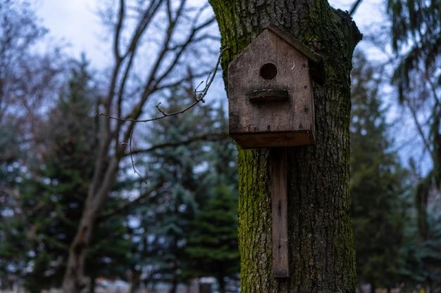 Antigo birdhouse montado em uma árvore