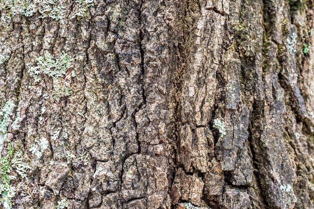 Antigo fundo de textura de casca de árvore