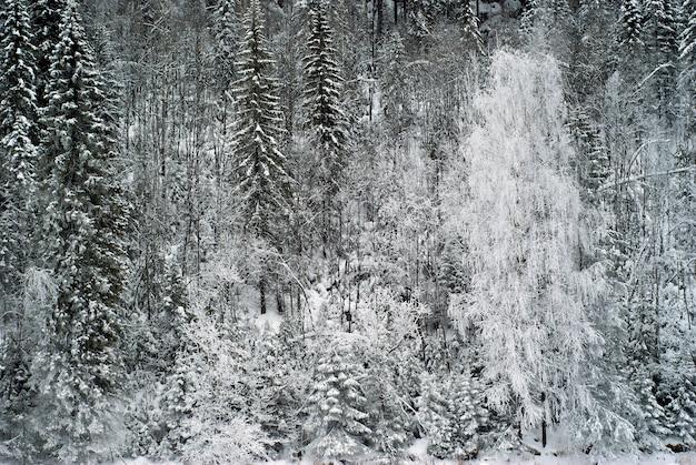 Ao fundo, uma parede de floresta de inverno na encosta de uma montanha
