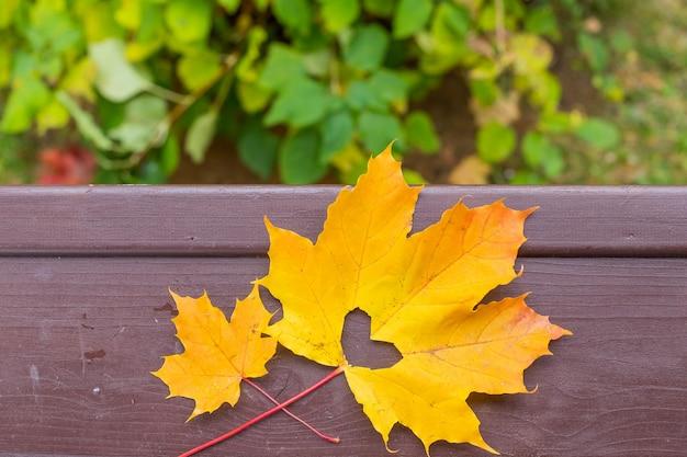 Apaixonar-se. folha de bordo amarelo com furo em forma de coração