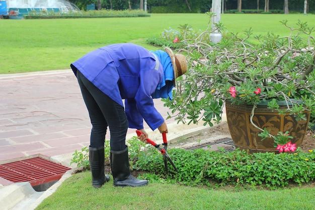 Aparamento de grama gramado, cortes arbusto verde com uma tesoura