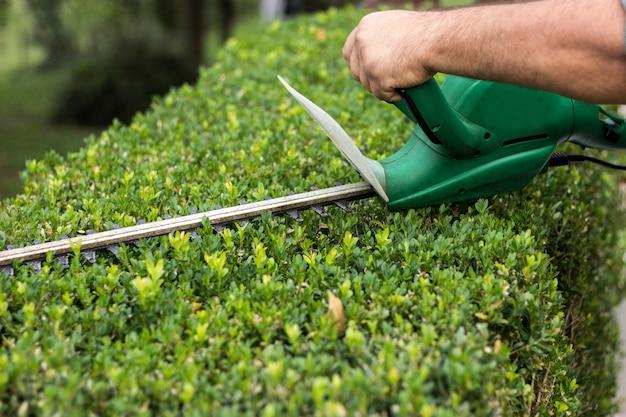 Aparar os arbustos