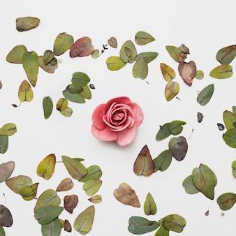 Apartamento leigos de belas flores