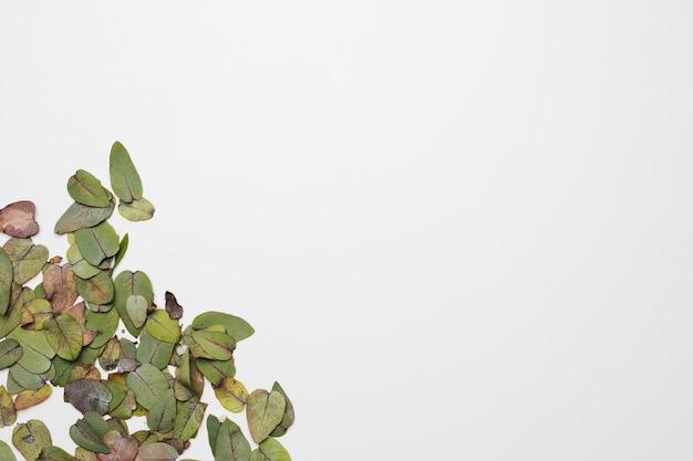 Apartamento leigos de folhas com copyspace