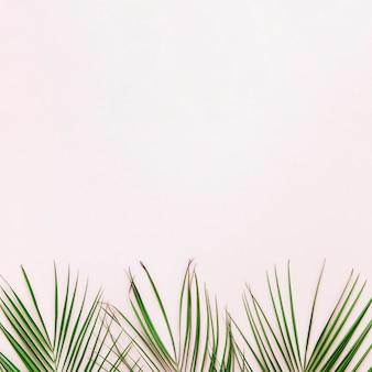 Apartamento leigos de folhas tropicais com copyspace