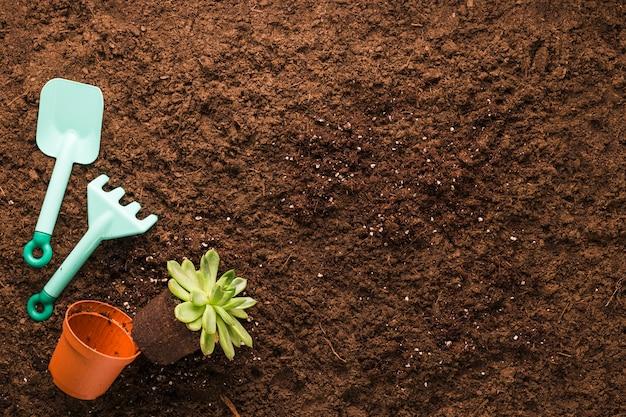 Apartamento leigos de plantas e ferramentas de jardinagem com copyspace