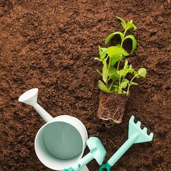 Apartamento leigos de plantas e ferramentas de jardinagem