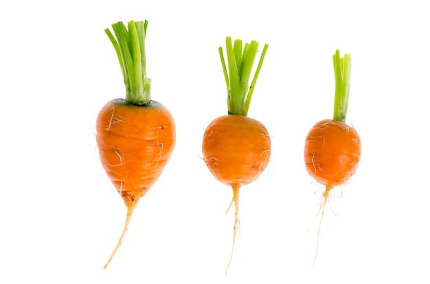 Apenas colheu em volta das cenouras de romeo, isoladas no fundo branco.