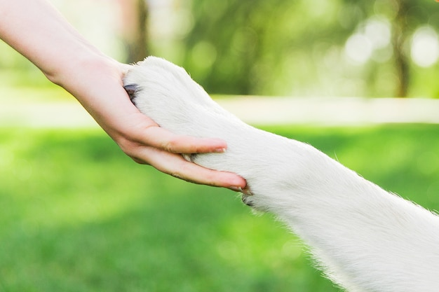 Aperto de mão com cachorro. pata do cão na mão da fêmea. cachorro, com, dono, parque