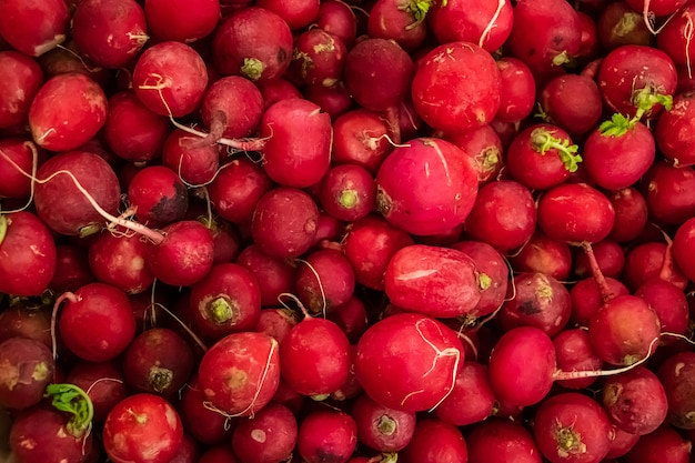 Apetitoso jovem rabanete vermelho closeup cultive vegetais para uma dieta saudável
