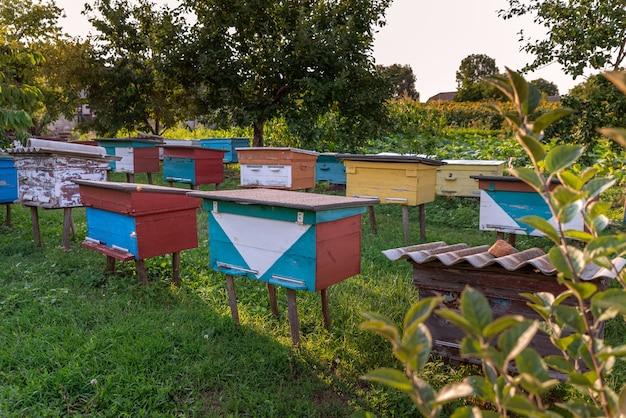 Apiário de verão com várias colmeias de abelhas coloridas de madeira localizadas na horta