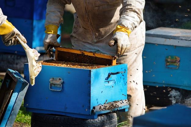 Apicultor colhendo mel com roupas de proteção