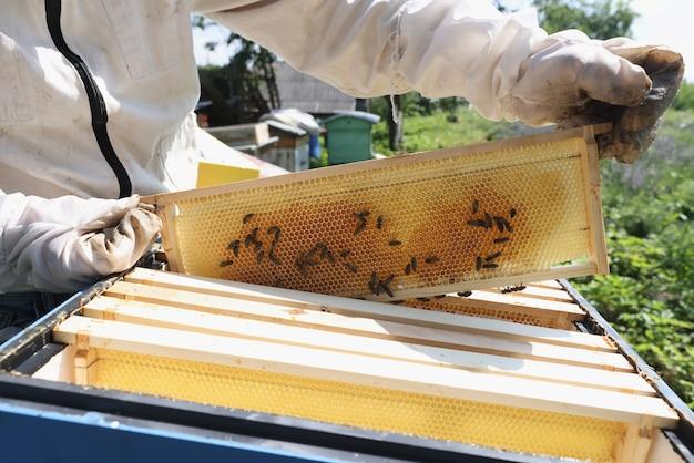 Apicultor com traje de proteção e luvas segura favo de mel com abelhas reprodutoras em casa