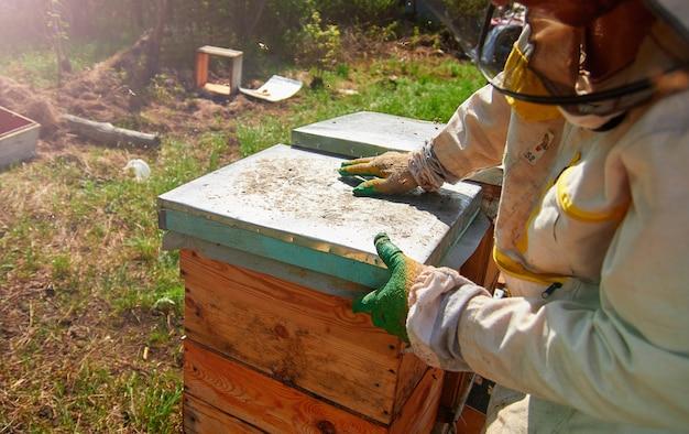 Apicultor de luvas e fantasia de apicultor verifica colmeias com abelhas, prepara-se para a coleta de mel, cuida de armações com favos