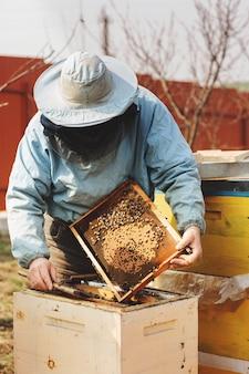 Apicultor está trabalhando com abelhas e colmeias no apiário