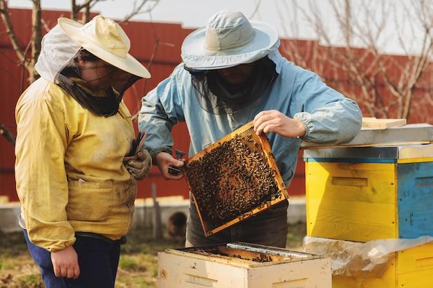 Apicultor, inspeccionando, colmeia abelha, após, inverno