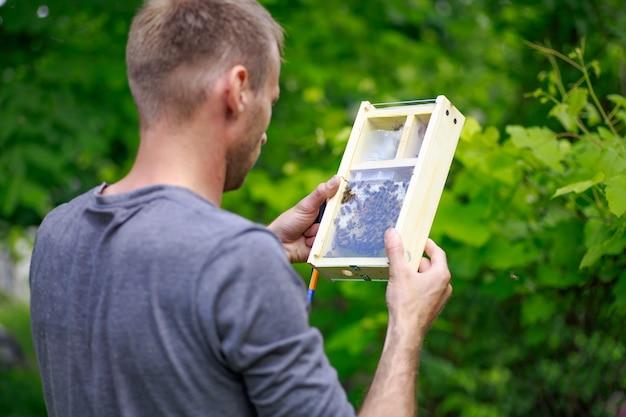 Apicultor olha para a abelha na caixa do apiário. extraindo mel da colmeia.