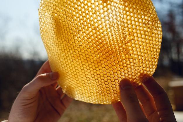 Apicultor olhando atentamente para o favo de mel à luz do sol