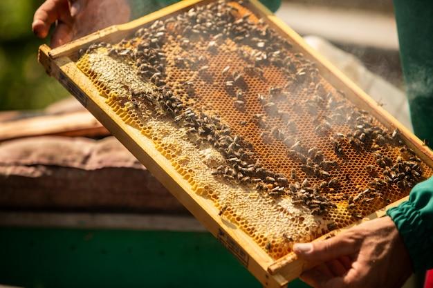 Apicultor que colhe o mel